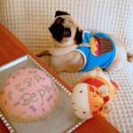 Бери кучешка торта
